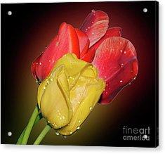 Tulips Acrylic Print by Elvira Ladocki