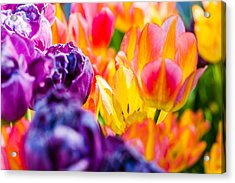 Acrylic Print featuring the photograph Tulips Enchanting 39 by Alexander Senin