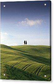 Twin Cypresses Acrylic Print by Michael Hudson