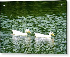 Two Ducks Acrylic Print