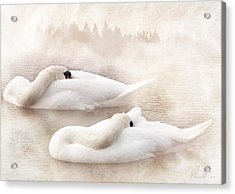 Two Swans Acrylic Print by Svetlana Sewell