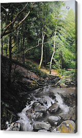 Two Trees In Light Acrylic Print by Harry Robertson