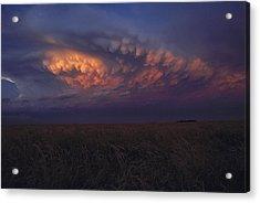 United States, Kansas,  Wheat Field Acrylic Print by Keenpress
