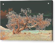 Unusual Tree - Digital Painting Acrylic Print by Merton Allen