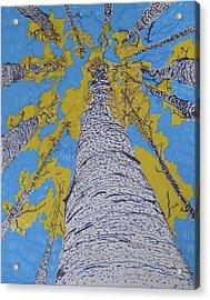 Up At Birch Acrylic Print by James SheppardIII