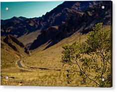 Valley Of Fire Nevada Acrylic Print by Patrick  Flynn