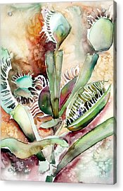 Venus Fly Trap Acrylic Print by Mindy Newman