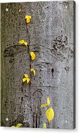 Acrylic Print featuring the photograph Vine Climber by Deborah  Crew-Johnson