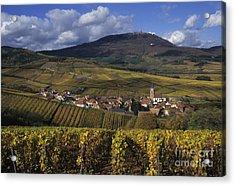 Vineyard In Alsace, France Acrylic Print by Jean-Louis Klein & Marie-Luce Hubert