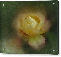 Acrylic Print featuring the photograph Vintage October Rose  by Richard Cummings