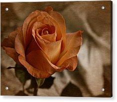 Vintage Orange Rose Acrylic Print by Richard Cummings