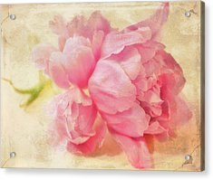 Vintage Pink Acrylic Print by Cathie Tyler
