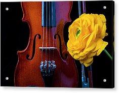 Violin And Ranunculus Acrylic Print