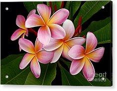 Wailua Sweet Love Acrylic Print