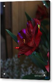 Acrylic Print featuring the photograph Waiting For You by Marie Neder