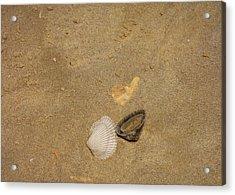 Shells Washed Ashore Acrylic Print by JAMART Photography
