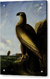 Washington Sea Eagle Acrylic Print by John James Audubon