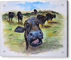 Water Buffalo Kiss Acrylic Print by Clyde J Kell