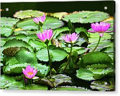 Acrylic Print featuring the photograph Water Lilies by Anthony Jones