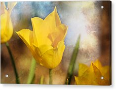 Water Lily Tulip Flower Acrylic Print