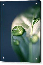 Water Of Life Acrylic Print