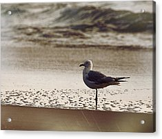 Water Wading Acrylic Print by JAMART Photography