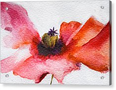 Watercolor Poppy Flower Acrylic Print
