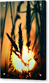 We Are Free Acrylic Print by Kerry Langel