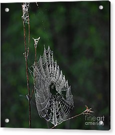 Acrylic Print featuring the photograph Webs We Weave by Skip Willits