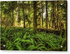Western Sword Ferns Acrylic Print by Rich Leighton
