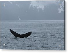 Acrylic Print featuring the photograph Whale Fluke by Brandy Little