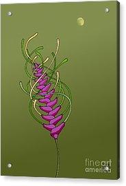 whEAT alien FUCsia I Acrylic Print