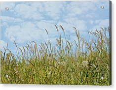 Whispers Of Summer Acrylic Print