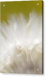 White Blossom 1 Acrylic Print by Dubi Roman