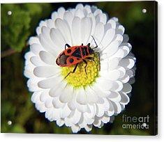 Acrylic Print featuring the photograph White Flower by Elvira Ladocki