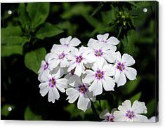 White Flowers Acrylic Print by Sumit Mehndiratta