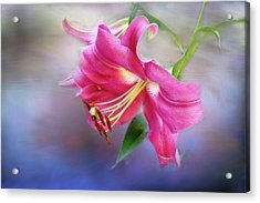 White Hall Lily Acrylic Print