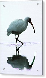 White Ibis Acrylic Print by Jerry Weinstein