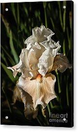 White Iris Acrylic Print by Robert Bales