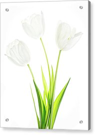 Acrylic Print featuring the photograph White On White by Rebecca Cozart