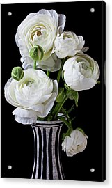 White Ranunculus In Black And White Vase Acrylic Print