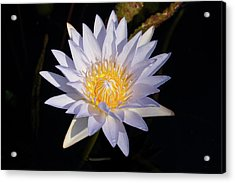 Acrylic Print featuring the photograph White Water Lily by Steve Stuller