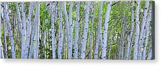 White Wilderness Panorama Acrylic Print by James BO Insogna