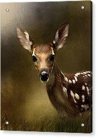 Whitetail Fawn Acrylic Print