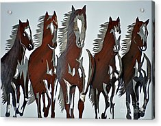 Acrylic Print featuring the photograph Wild And Free by Juls Adams