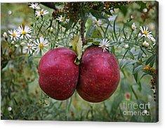 Wild Apples Acrylic Print by John Stephens