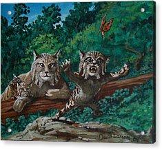 Wild Bob Acrylic Print by David  Larcom
