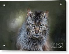 Acrylic Print featuring the photograph Wild Cat Portrait by Eva Lechner