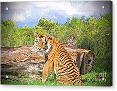 Wild Kingdom Acrylic Print by Judy Kay