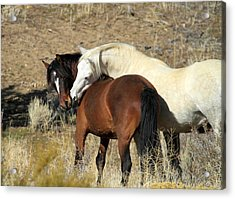 Wild Mustang Horses Acrylic Print